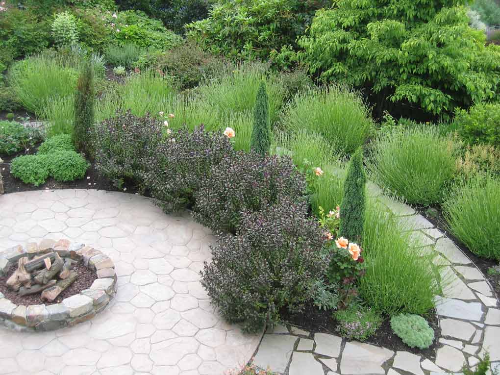Curving path circles around a rose garden with lavender