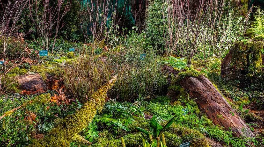 Hoh Rain Forest Garden at the 2016 Northwest Flower and Garden Show