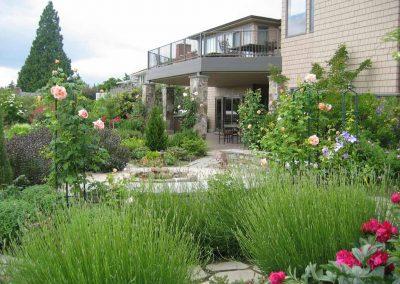 Lavender gives good late summer interest around the rose garden